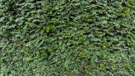 wall textures: Green Leaves background photo, summer garden