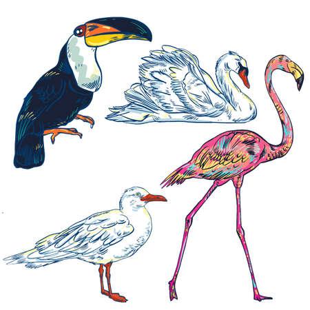 Super set of cute cartoon birds Illustration