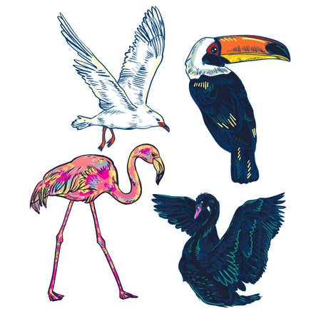 Super set of cute cartoon tropic exotic birds. Toucan, Swan, flamingo, gull. Summer collection