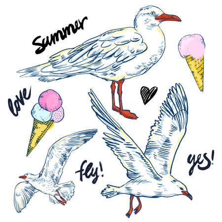 Vector illustration Seabirds. Set of beautiful seagulls and ice cream, summer time and sea fun mood Illustration