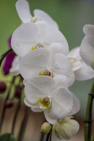 spring flowers in pots on the shelf of an Orchids flower shop Stock Photo