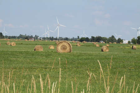 Freshly cut and baled round hay bales in a small farmers field, shared with Wind Turbines Stock Photo - 12615247