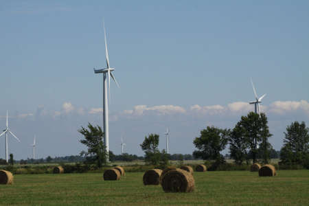 A field full of round freshly baled hay with white wind turbines in the background.  photo