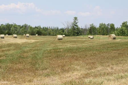 Freshly cut and baled round hay bales in a small farmers field Stock Photo - 15123069