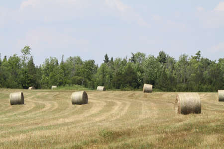 Freshly cut and baled round hay bales in a small farmers field Stock Photo - 15123059
