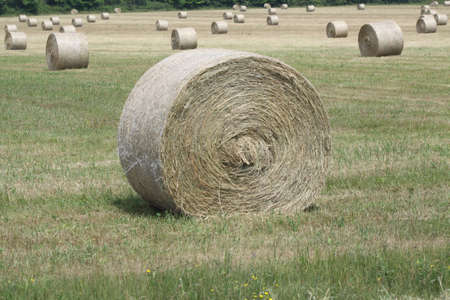 Freshly cut and baled round hay bales in a small farmers field Stock Photo - 15123071