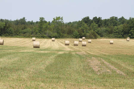 Freshly cut and baled round hay bales in a small farmers field Stock Photo - 15123067