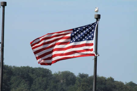 declaration: The American Flag,  Stars   Stripes  blowing in the wind, framed against a blue sky
