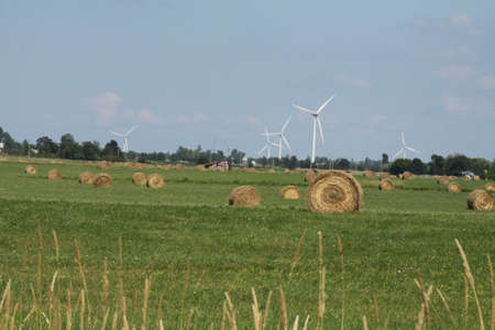 A field full of round hay bales with white wind turbines in the background against a blue sky and white clouds photo