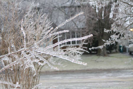 Branches and plants covered with a coating of ice after a downpour of freezing rain