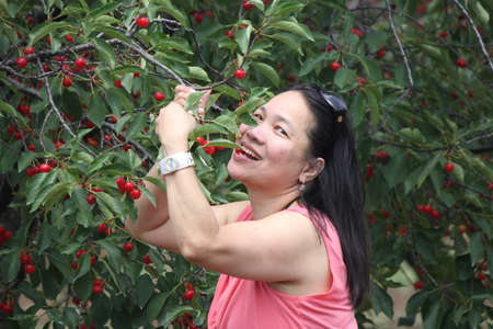 Pretty lady beside a cherry tree in a small orchard, pretending to eat cherries right off the tree Stock Photo