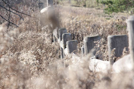 overrun: Wooden fence separating the property at a small farm over-run with tall grasses.