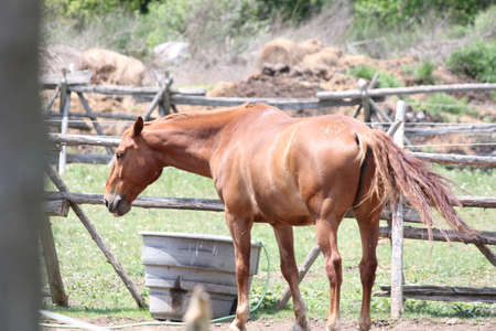 corral: Brown colored horse in a small enclosed corral.