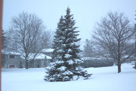 Snow covering the trees in front of a home in a residential area of a township. Stock Photo