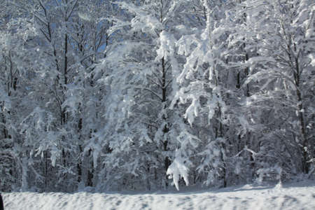 Fluffy white snow covering all of the foliage and ground of a forested area along well used highway.