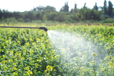 chemisches Sprühen auf einem Feld, Insektenbekämpfung und Krankheitsbekämpfung in der Landwirtschaft Standard-Bild