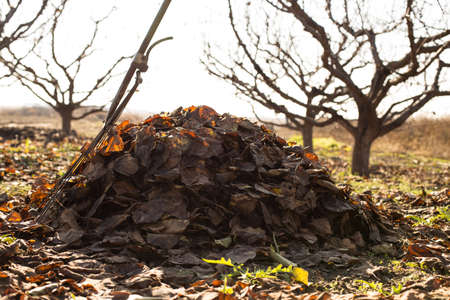 fallen leafs collected to the pile in a garden Stock Photo