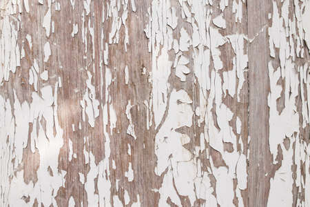 Wooden background with old white paint. Old paint is peeling off a wooden surface.