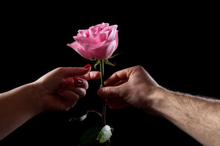 Man's hand giving a pink ros eto a woman, isolated on black. First dating with flowers.