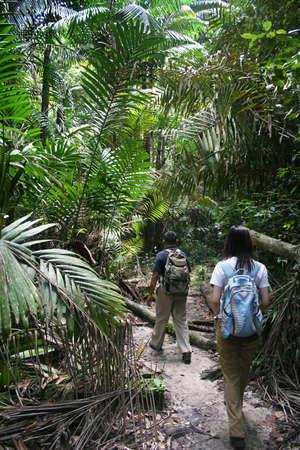 aventurero: Dos viajeros-trekking en la selva del Parque Nacional Bako. Foto de archivo