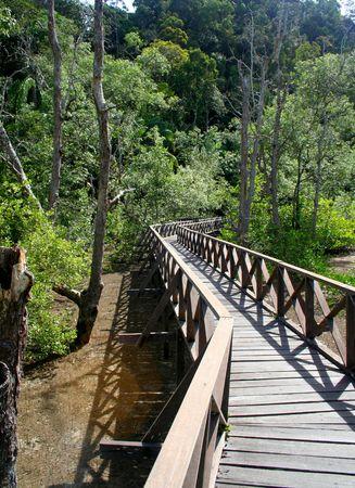 Il Boardwalk nella foresta di mangrovie B�ko National Park, Sarawak, Malesia.