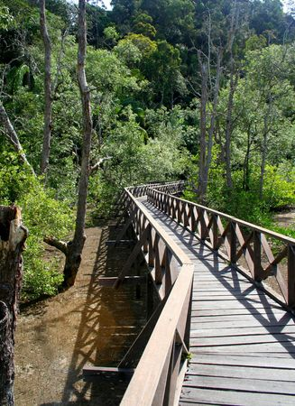 The boardwalk in the mangrove forest of Bako National Park, Sarawak, Malaysia. photo