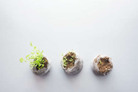 young small shoots growing out of the ground . concept of the first results, the first fruits, development