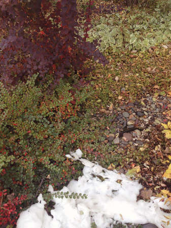 autumn garden with snow