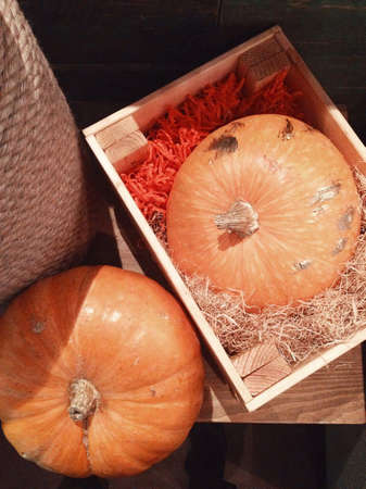 two yellow pumpkins in box