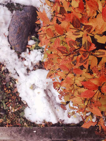 snow leaves and tree