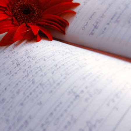 beautiful red flower with diary