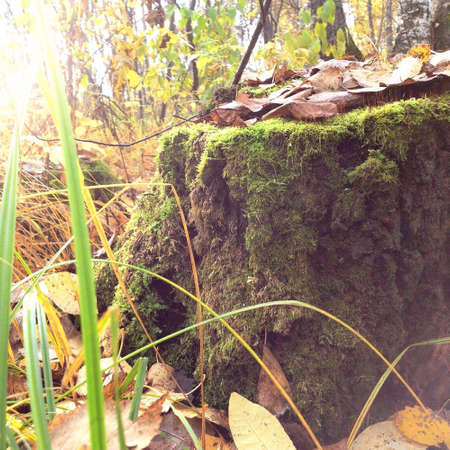 nature stump in the forest