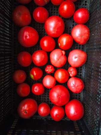 red tomato in box