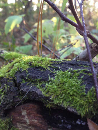 moss on a tree branch in the forest