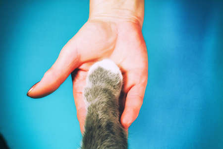 The hands of the family and the furry paw of the cat as a team. Fighting for animal rights, helping animals 版權商用圖片