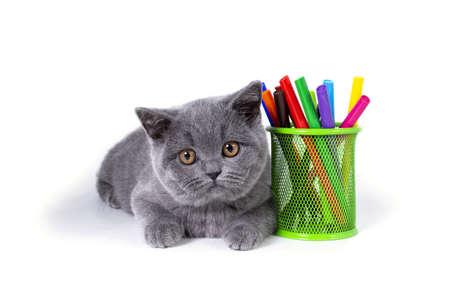 El encantador, gris, mullido gatito británico de pura raza, un vaso con rotuladores, sobre un fondo blanco. Bienvenido a la escuela