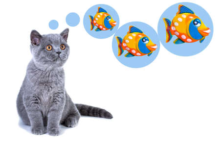 Close-up of a young grey kitten of British breed sitting dreaming of fish for dinner, thought bubbles overhead.