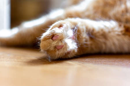 Beautiful close - up paws red cat who is at home. Beautiful background of healthy nature. Motion blur Stockfoto