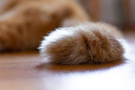 The tail of a kitten lying on the floor. The pet likes to sleep during the day. Motion blur