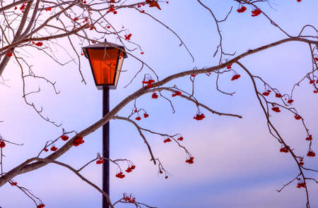 Beautiful view of the evening sky and mountain ash branches with berries, evening time on the background of a red lantern Stok Fotoğraf
