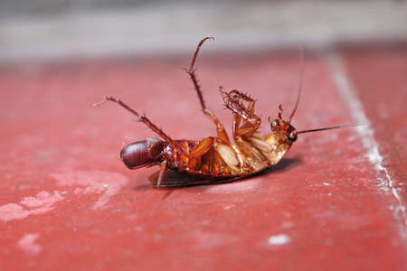 Cockroach lying on the back