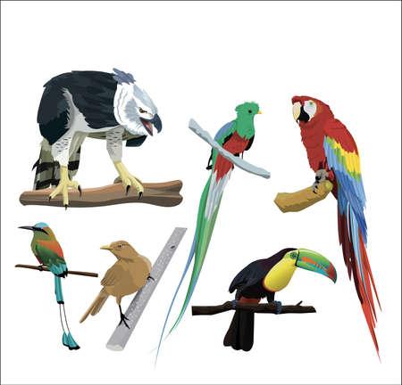 Birds of central America Stock Illustratie