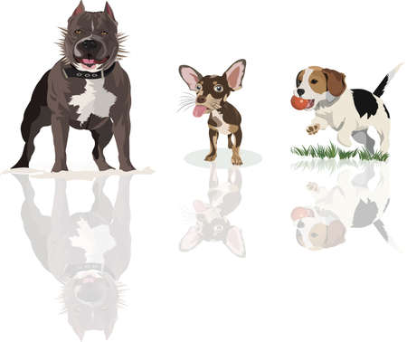 Kinds of high breed Dogs to raise, isolated on a white background with shadow.