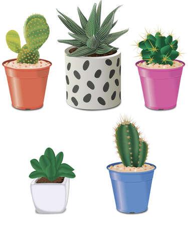 Cactus and succulents Stock Illustratie
