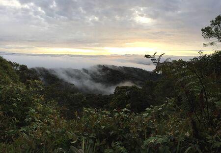 highlands: misty morning in cameron highlands