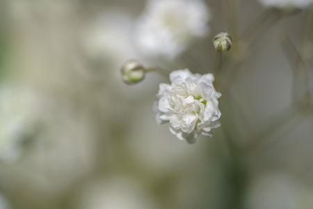 carroty: Small white flowers