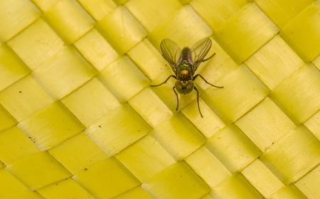 'compound eye': Dolichopodidae Fly Macro photo, insect Stock Photo