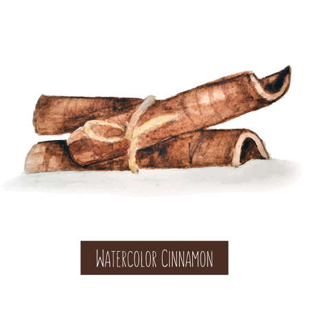 flavour: Watercolor hand drawn cinnamon illustration