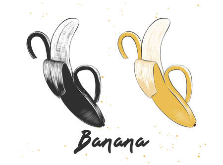 Hand drawn sketch of banana in monochrome and colorful isolated on white background. Detailed vegetarian food drawing.