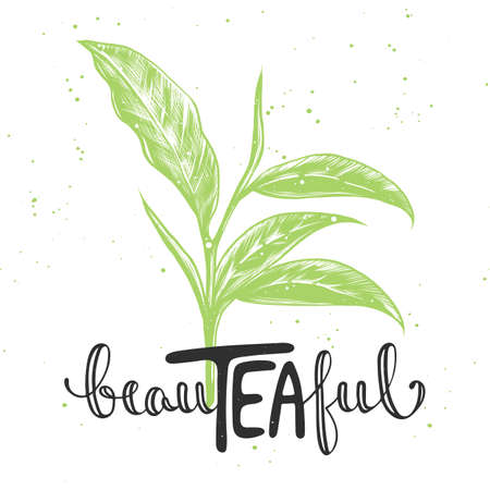 Beauteaful text with sketch of tea leaf vector illustration